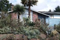 Rush Locates photo of yard with many cactus species